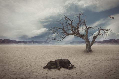 Habitat Loss Threatens Planet's Stability